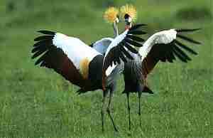 Экзотические птицы планеты
