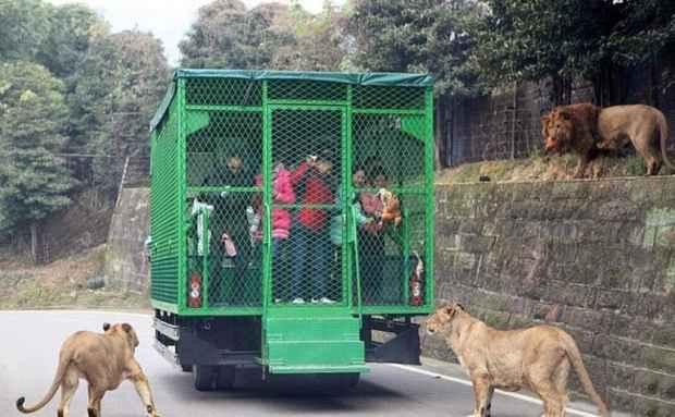 Хищники на свободе в зоопарке Lehe Ledu